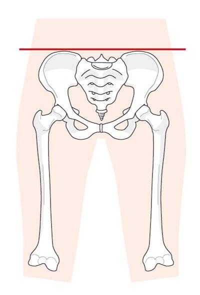 骨盤が正常の時の状態を表す図です。芝下(しばした)鍼灸整骨院